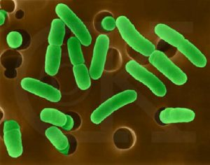 Fecal Coliform...